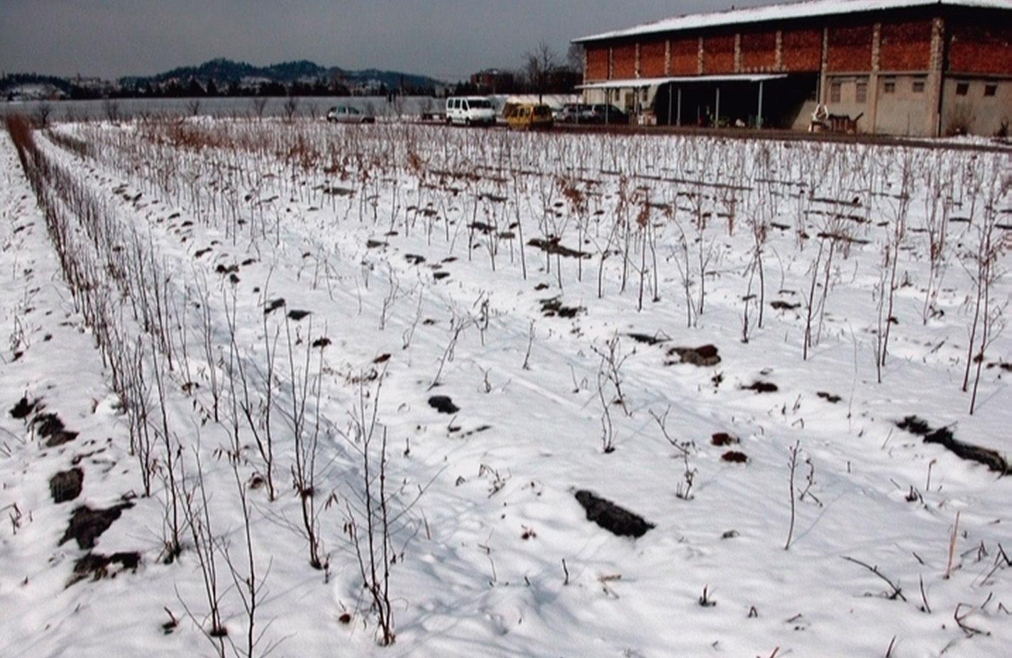 le colture biologiche durante l'inverno nel rispetto della filosofia Aretè
