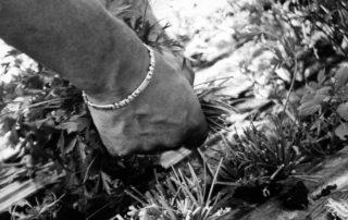 operatore che raccoglie le erbette dal campo